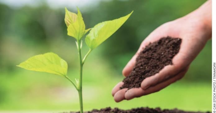 treeplanting stock image